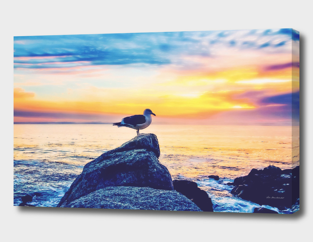 bird on the stone with ocean sunset sky background