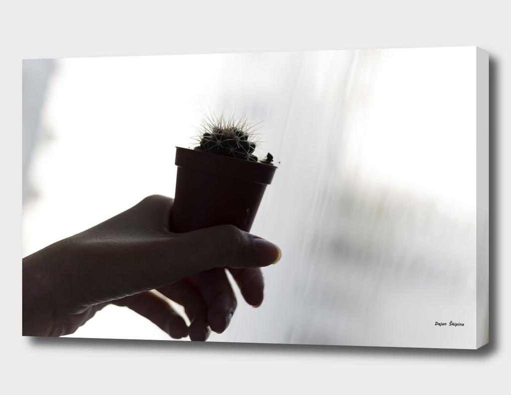 Art Act Cactus Sensual