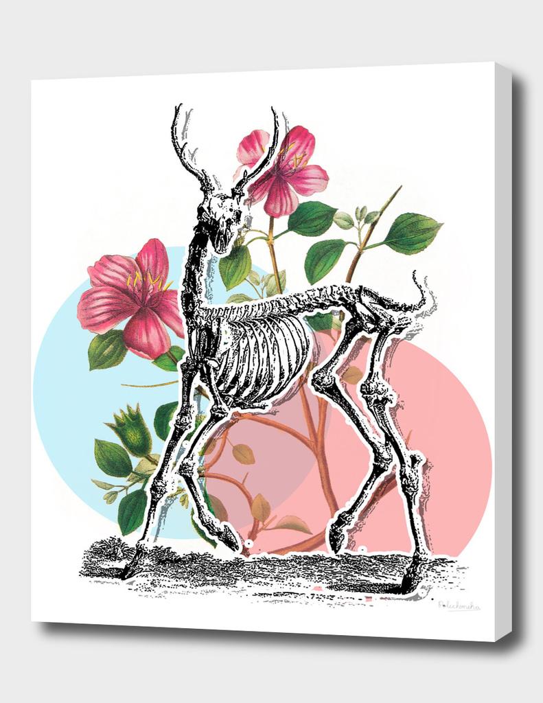 Deer Skeleton