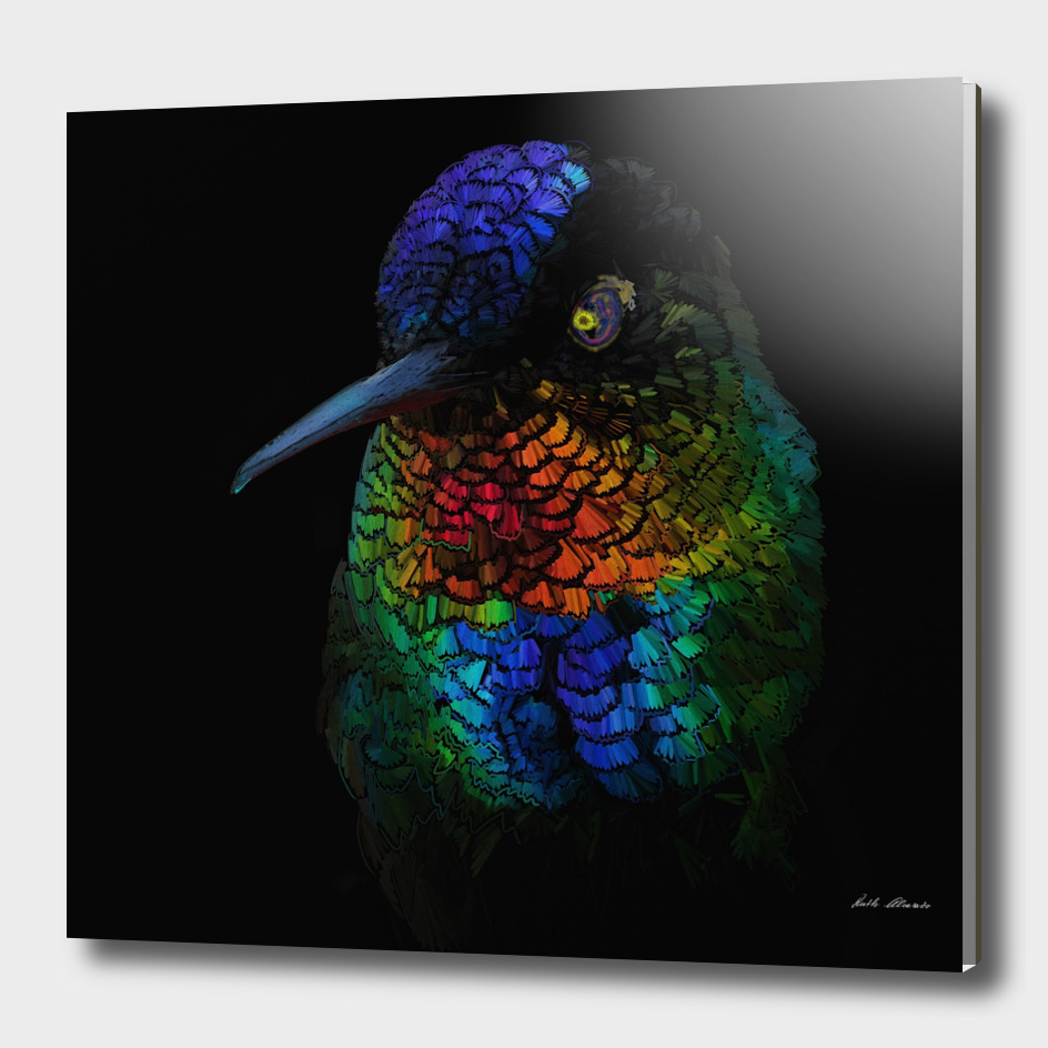 Humming Bird Black Background Finished
