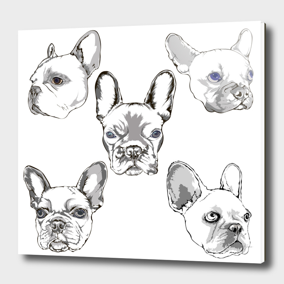French bulldog portrait sketch hand drawing set