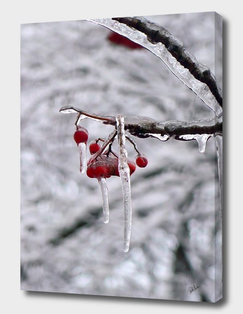 Winter frozen rowan berry