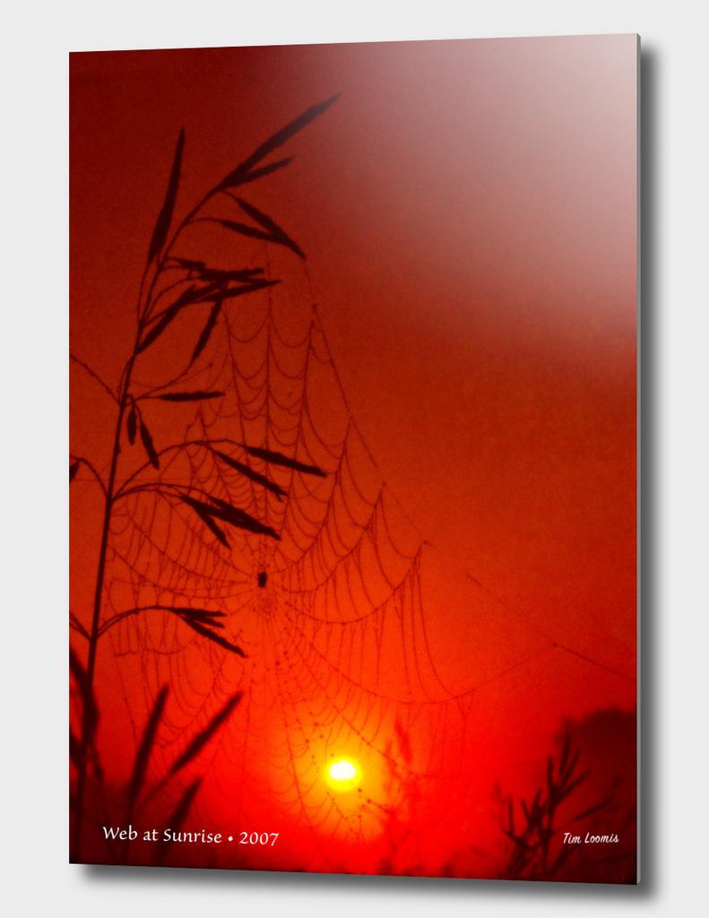 Web at Sunrise