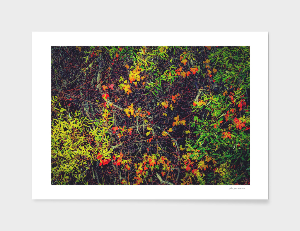 red yellow orange and green leaves background