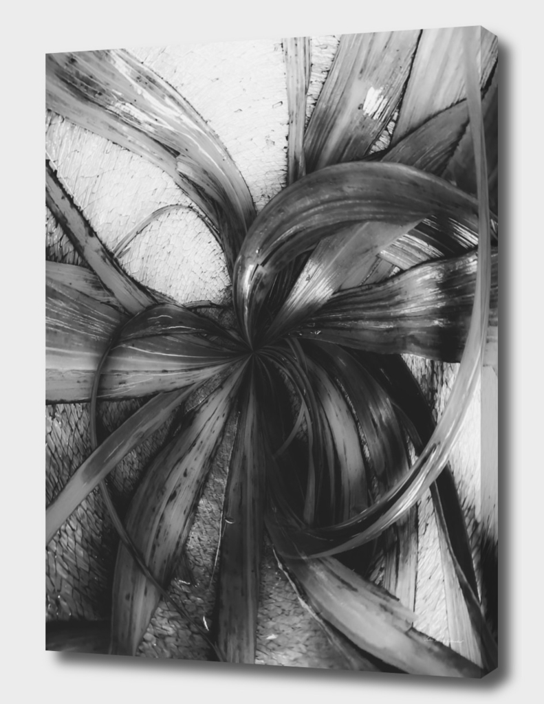 spiral leaves texture background in black and white