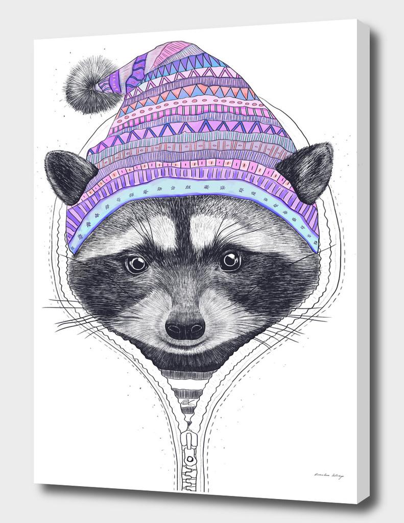 The raccoon in a hood