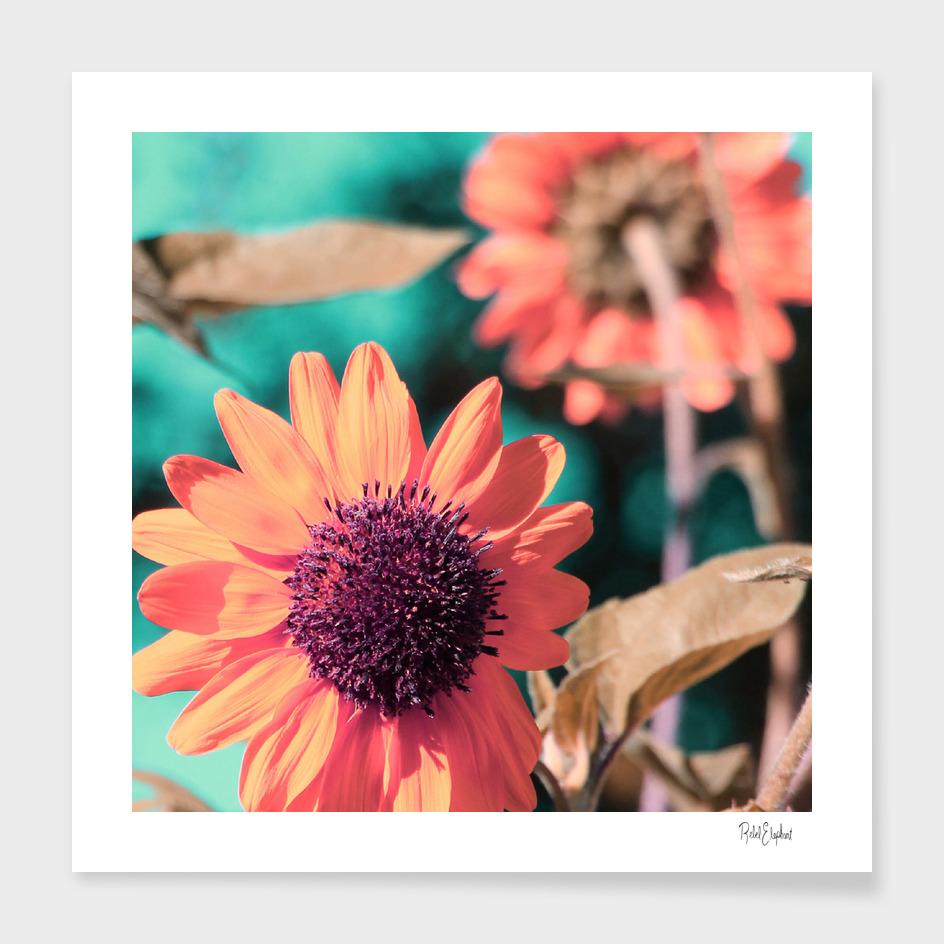 Technicolor Sunflowers