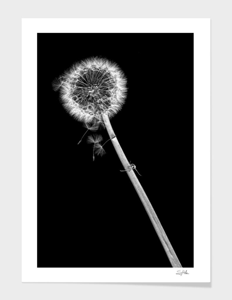 Wishing Weed