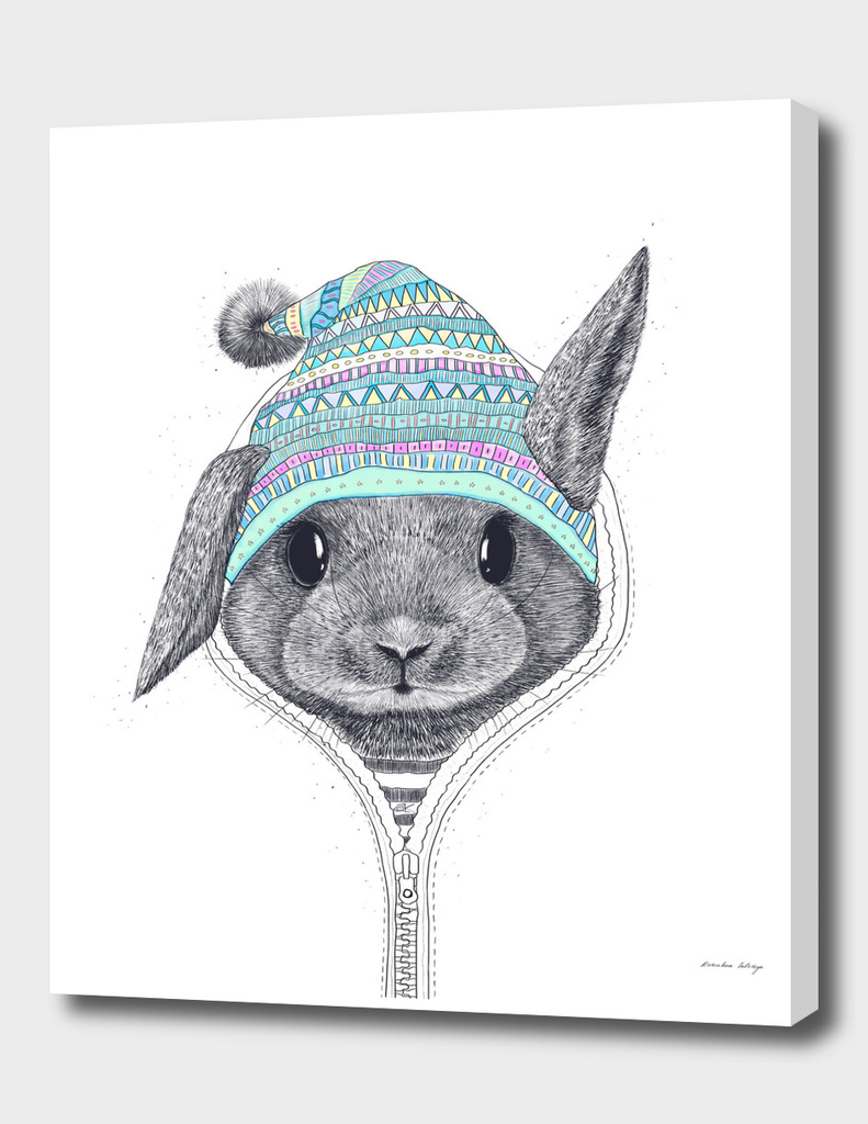 The rabbit in a hood
