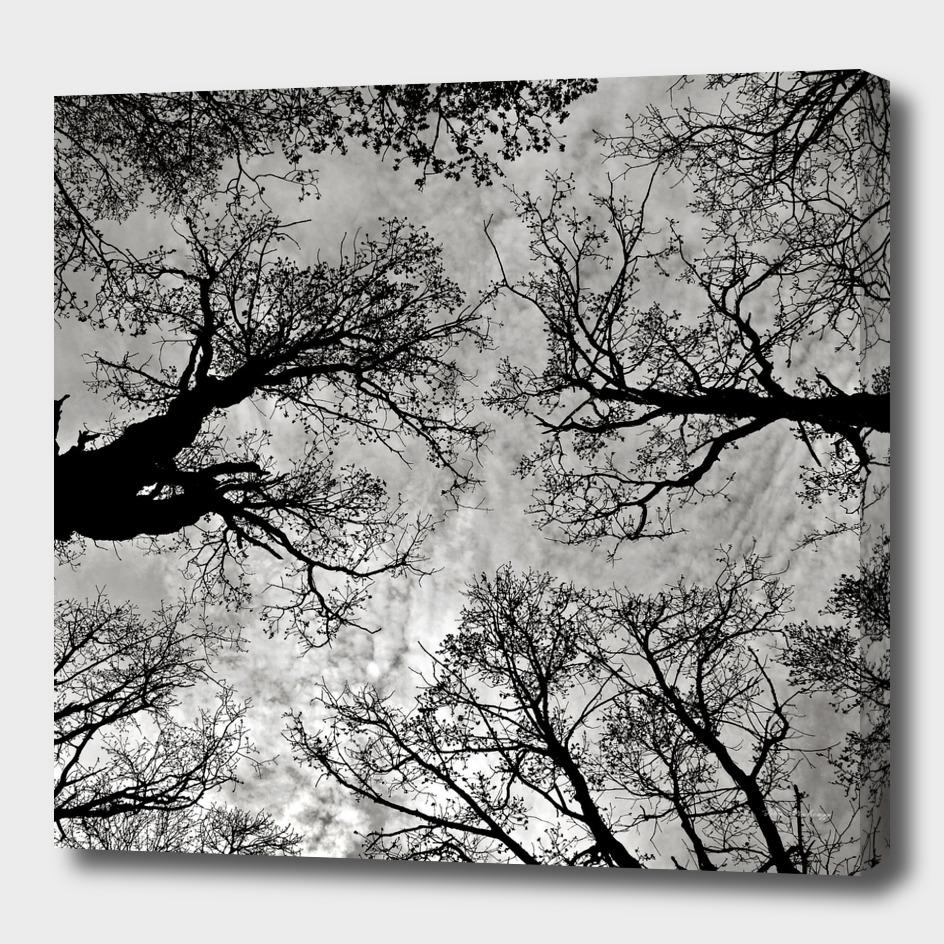 Meditative Power of Trees