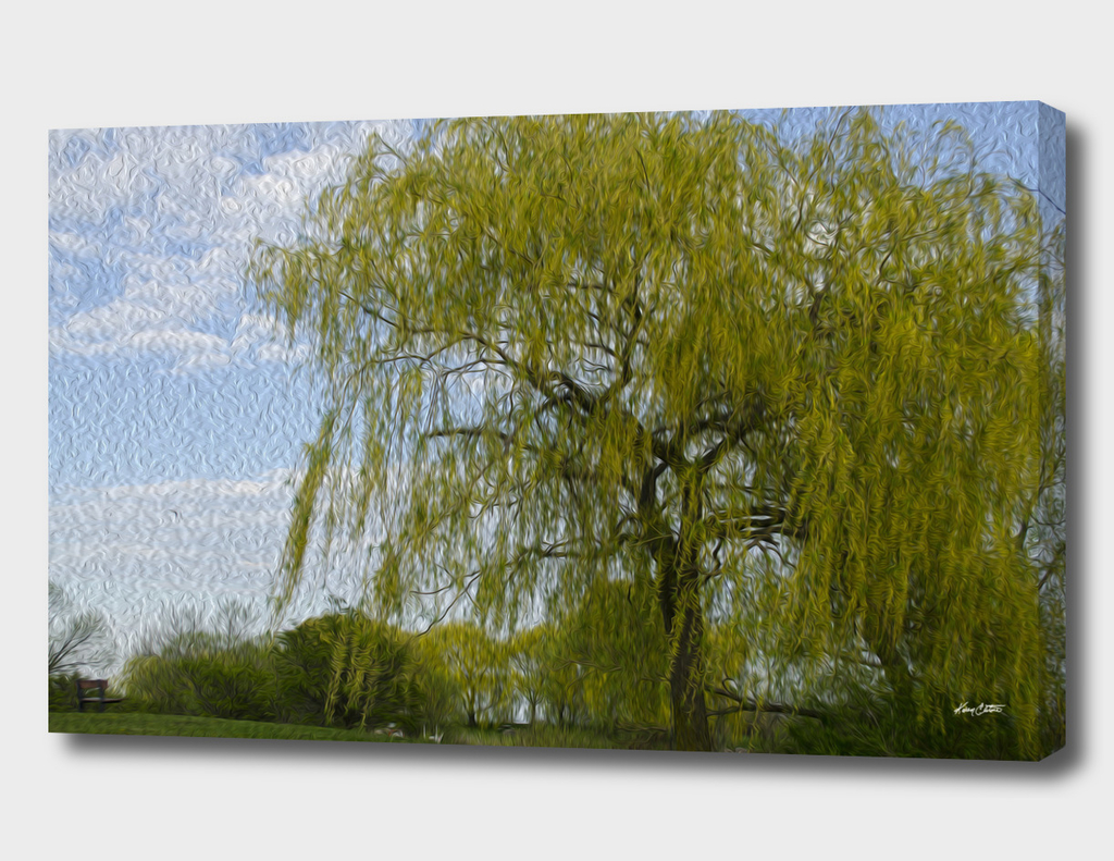 A weeping willow in spring