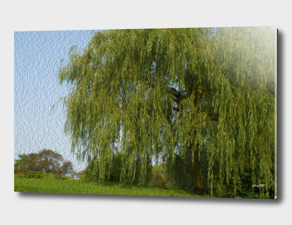 A weeping willow in summer