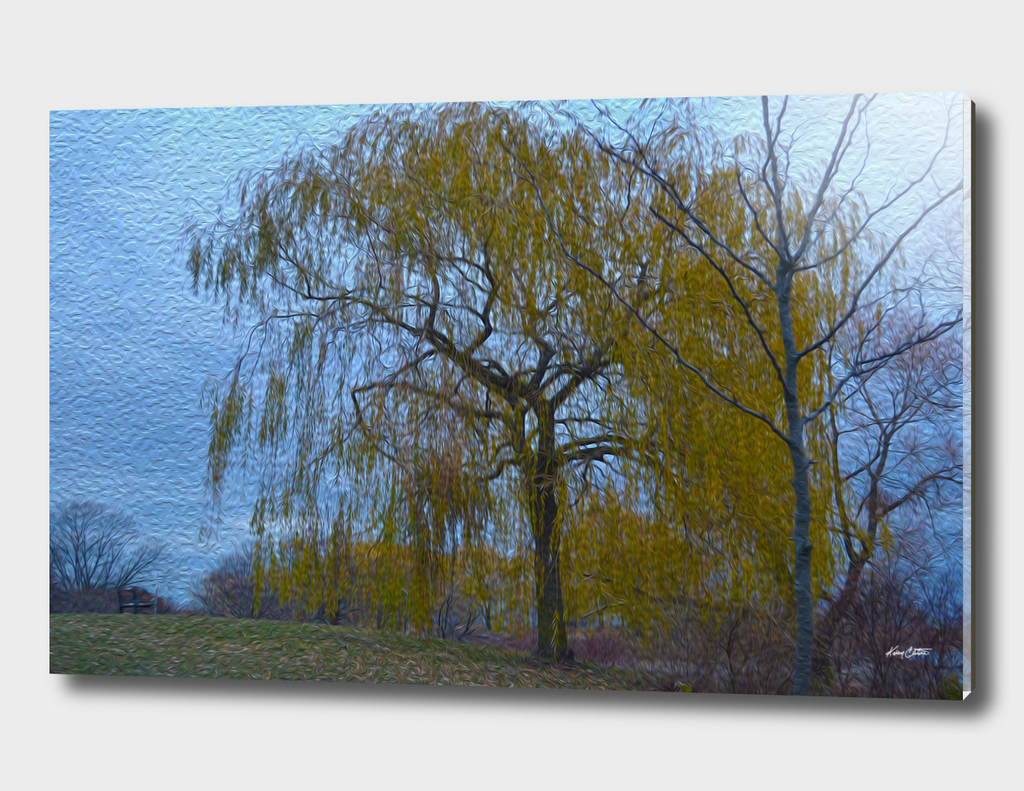 A weeping willow in fall