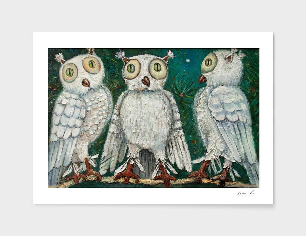 three white owls