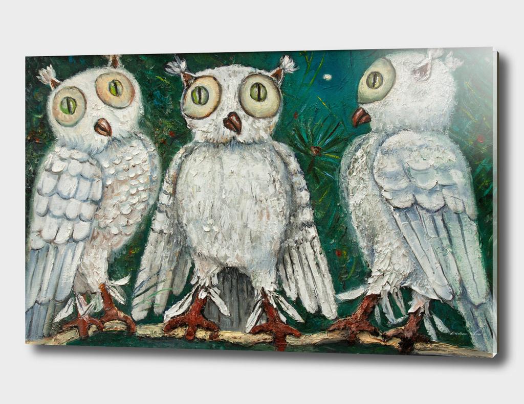 three white owls