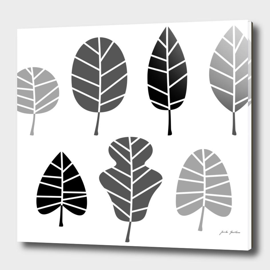 Black grey leaves on white : New design