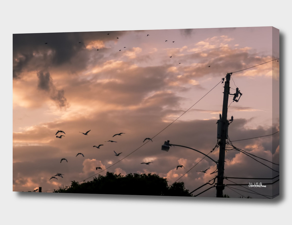 Miami Sky and birds