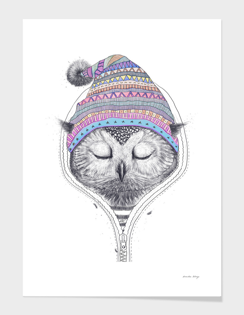 The Owl in a hood