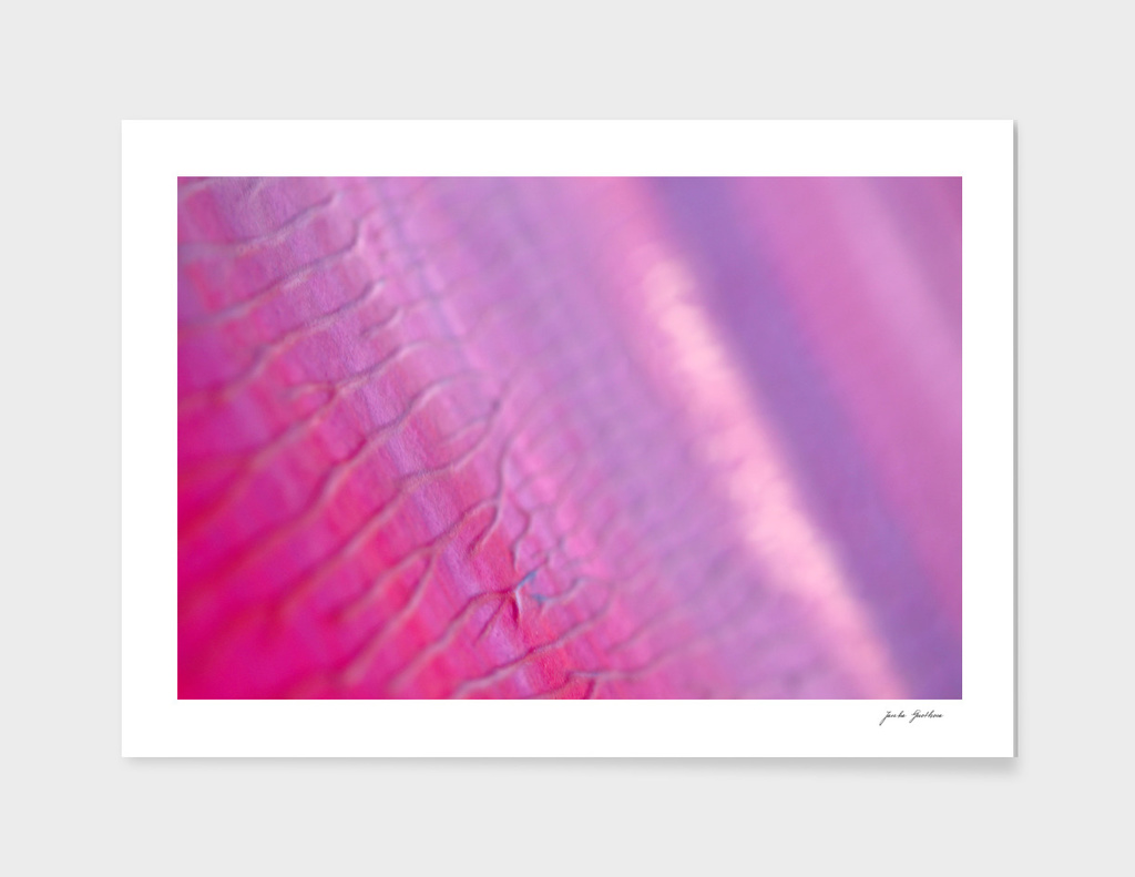 New art in shop : purple photo Edition