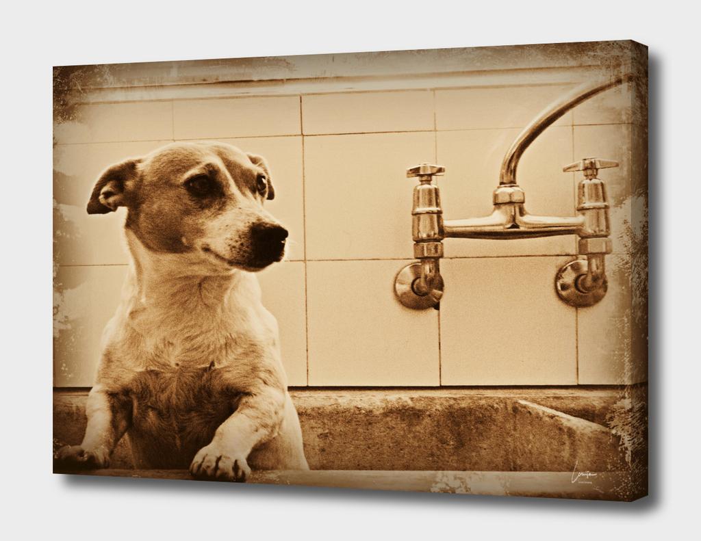 Vintage Jack Russel Bathtime