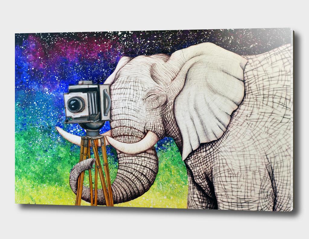 Pachyderm Photographer