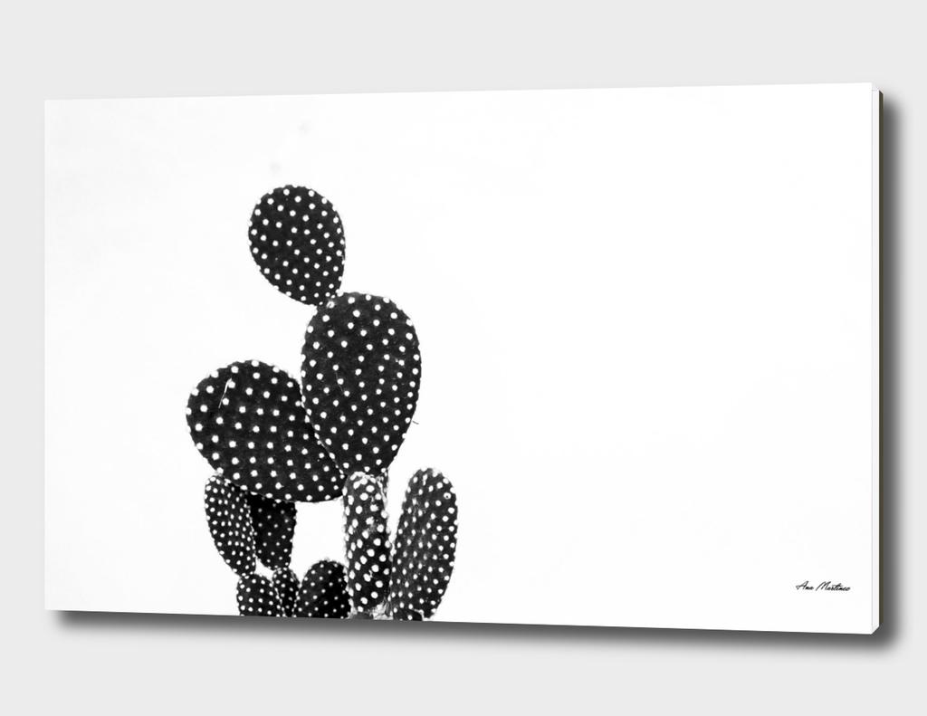 cactus nature