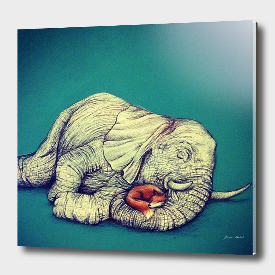 Elephant nap