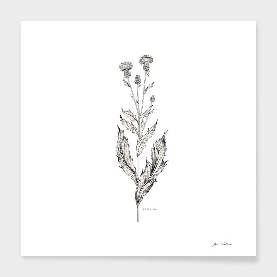Botanical 01