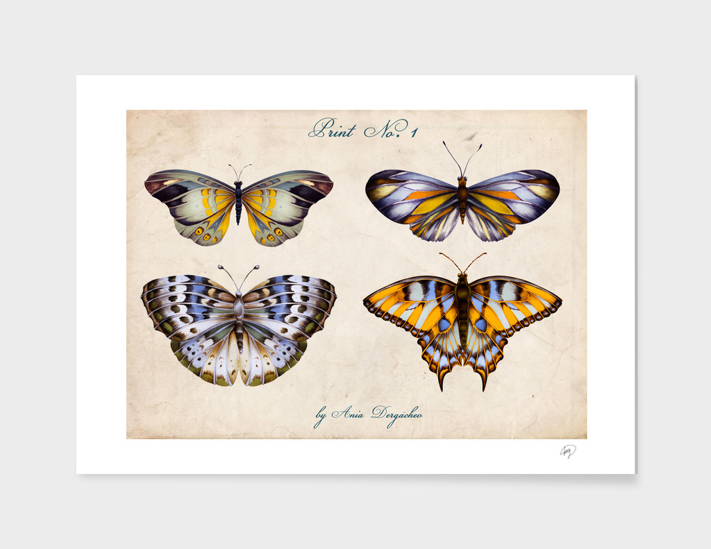 vintage butterfly collection nature illustration