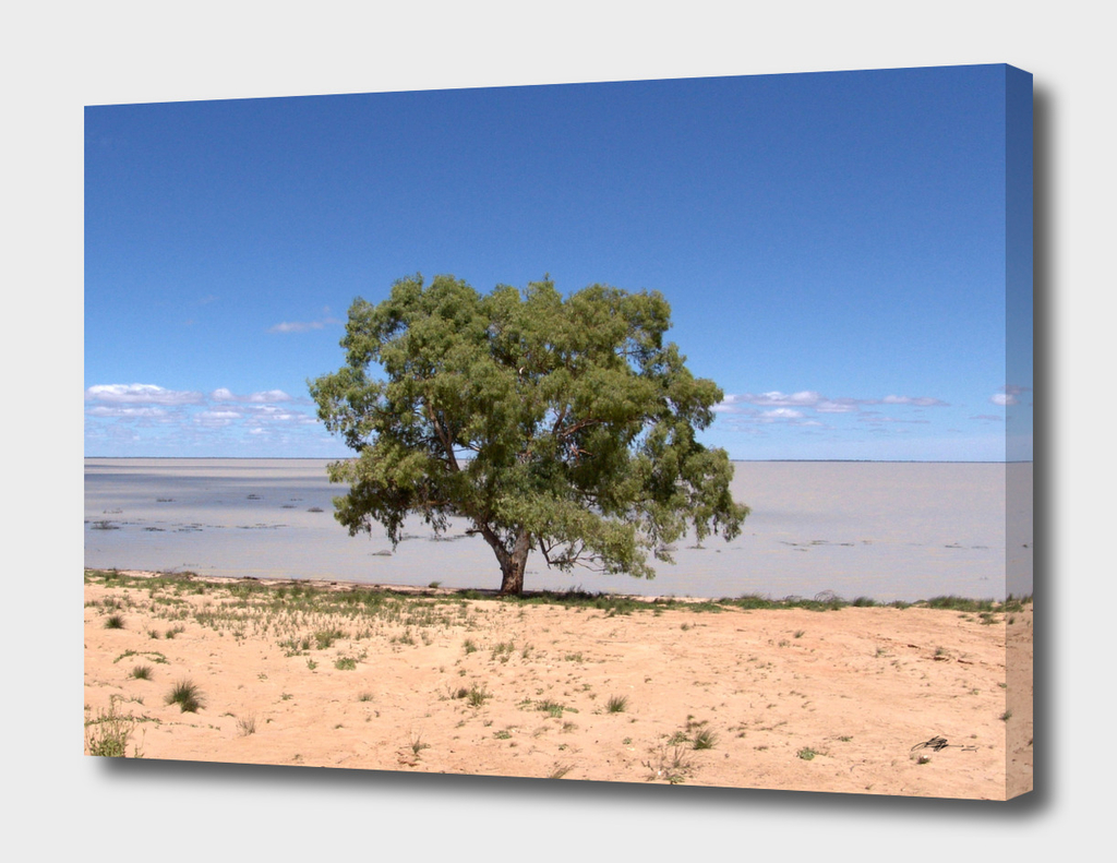 The Tree and The Outback Lake