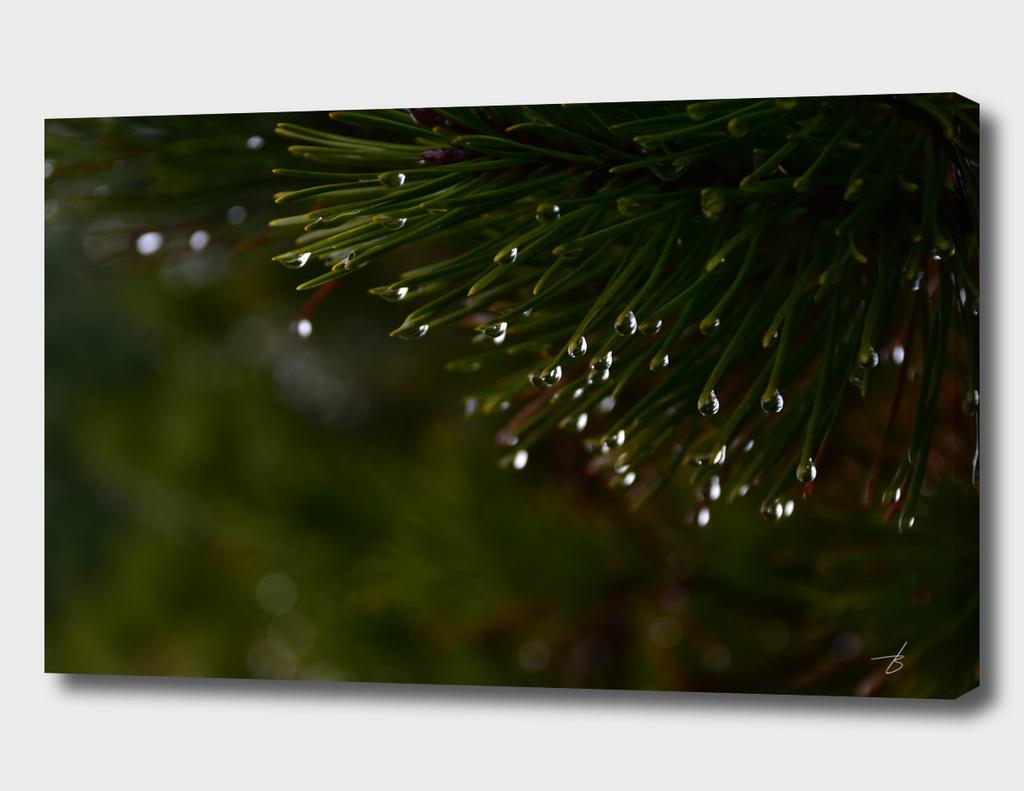The Light inside a Raindrop