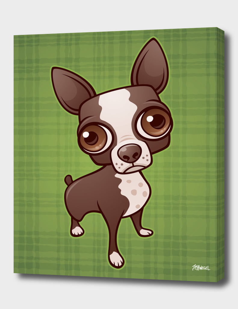 Zippy the Boston Terrier