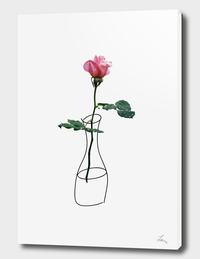 rose in the vase