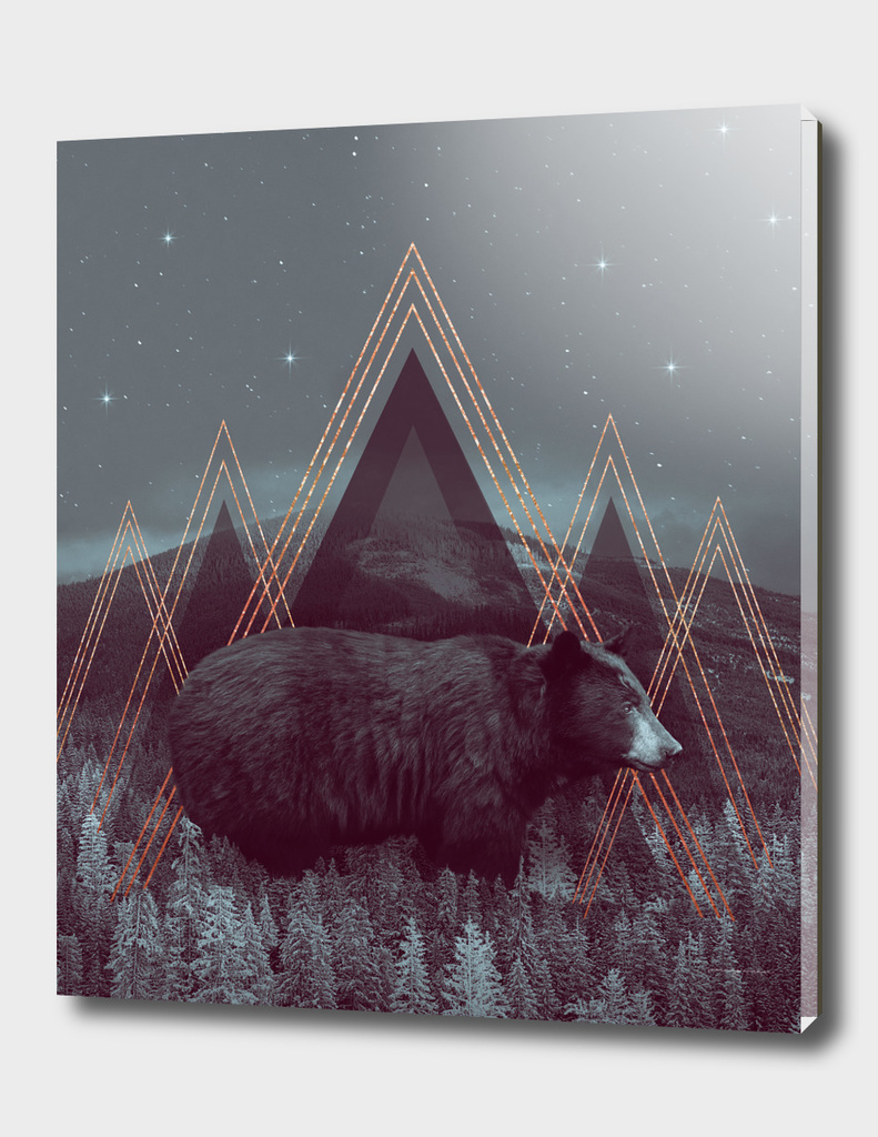 In Wildness | Bear