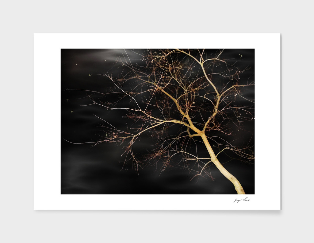 Florida Winter Tree