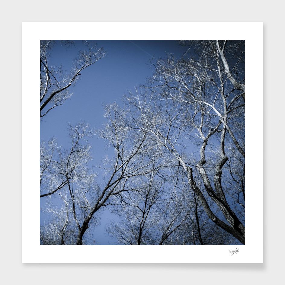 Landscape in the winter II