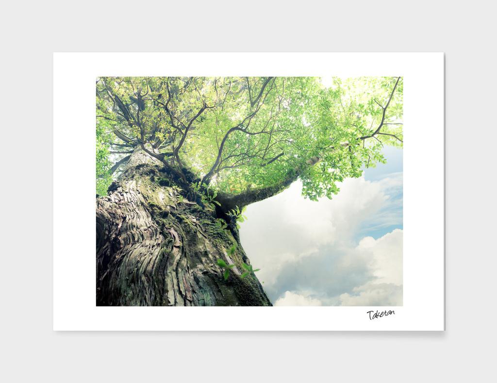 Under the big tree