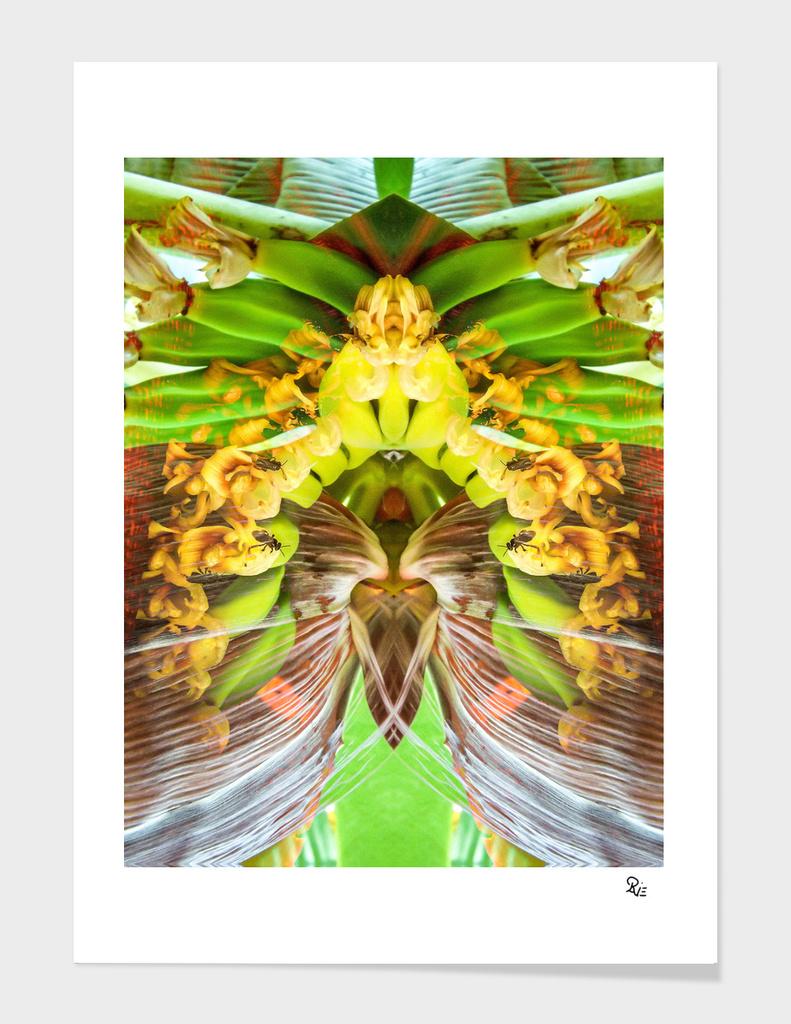 Bananis 28