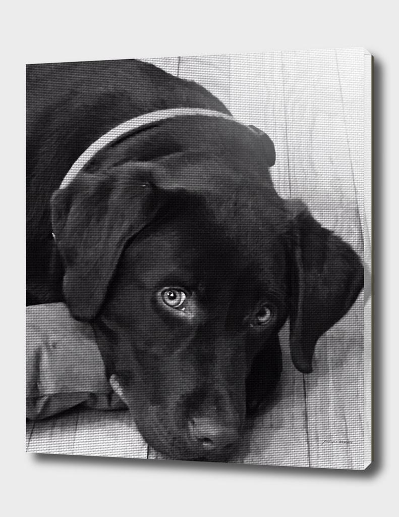 Puppy Portrait 2