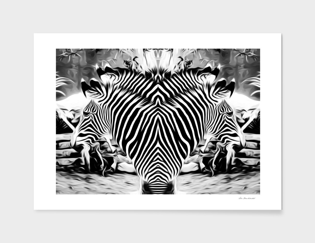 black and white zebras background