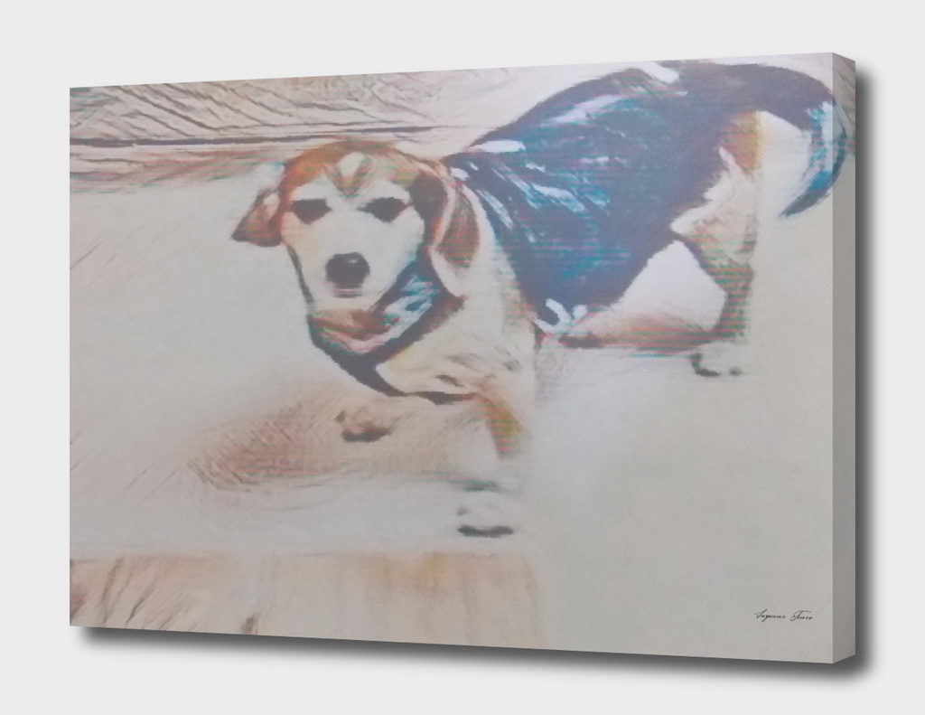 Beagle Listening