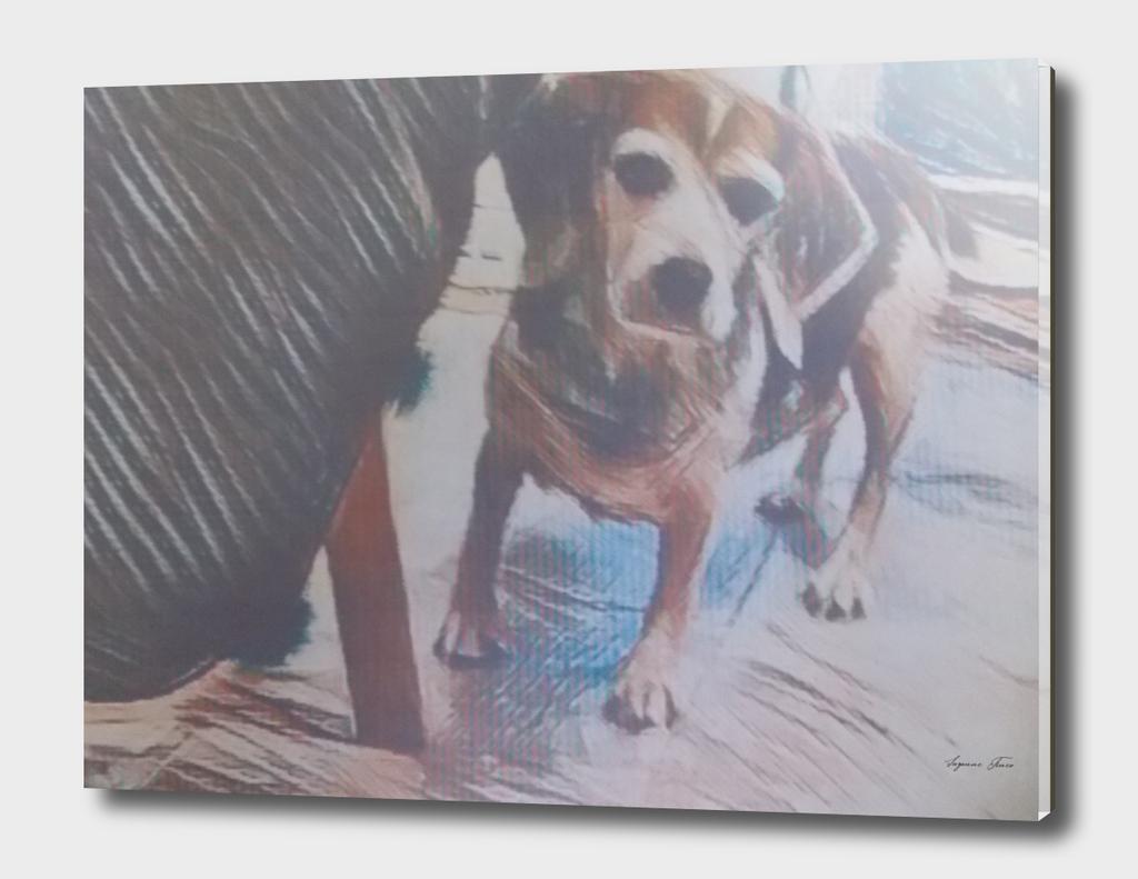 Curious Beagle