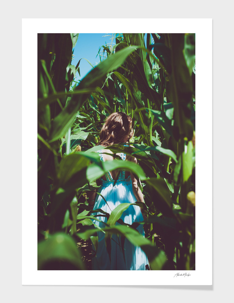 In to the corn field
