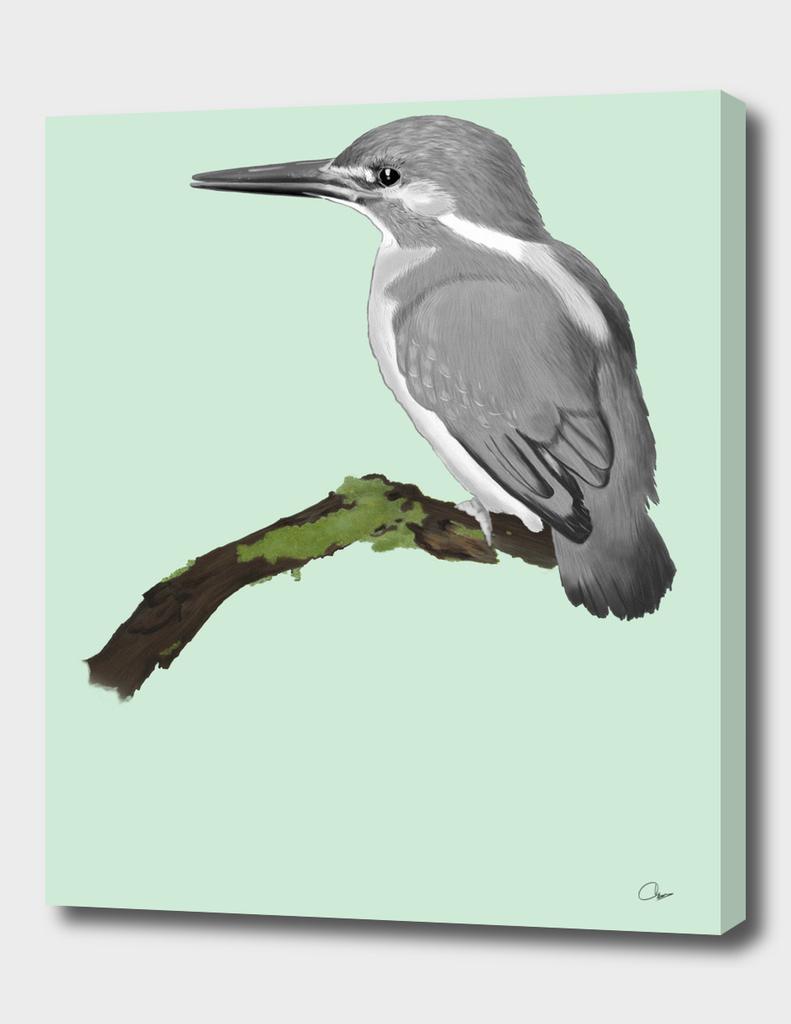 Kingfisher in gray