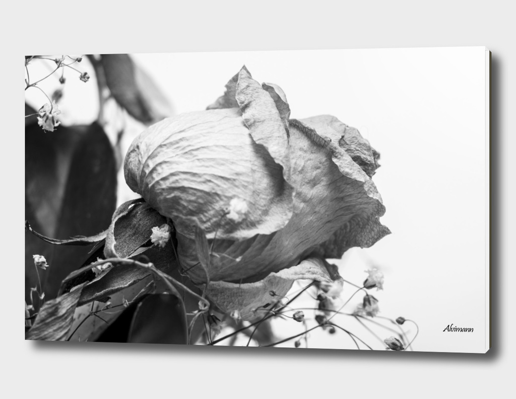 Dead Flowers in B&W