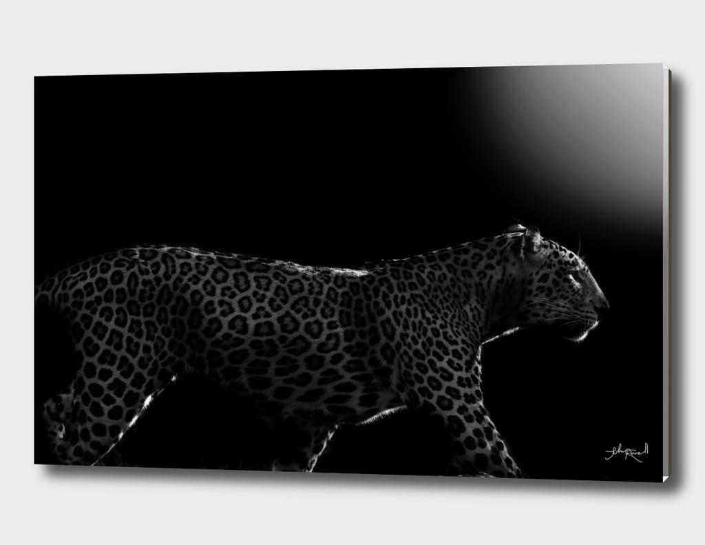 Wild ART - Leopard at dawn