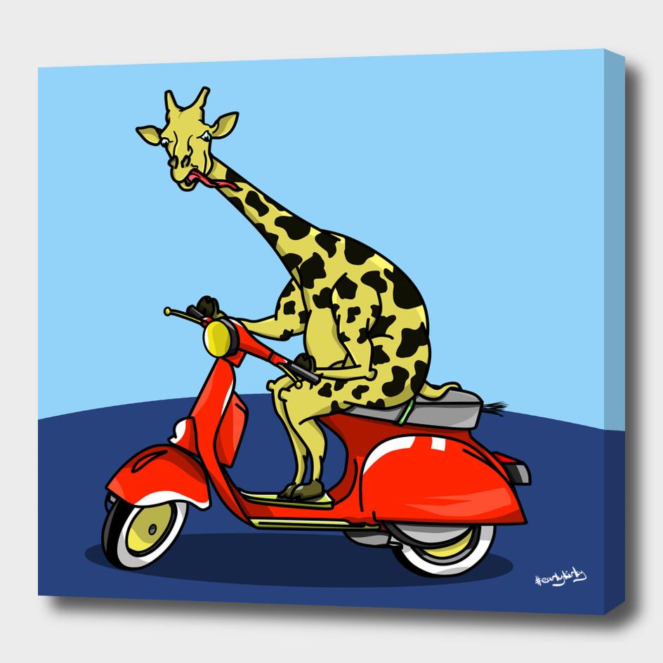 Giraffe riding a moped
