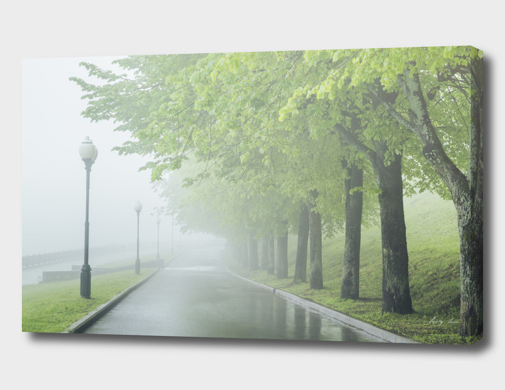 Fog in park on waterfront. Wet green Forest