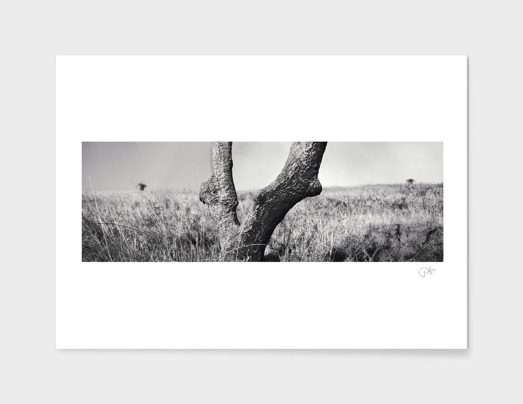Vic tree