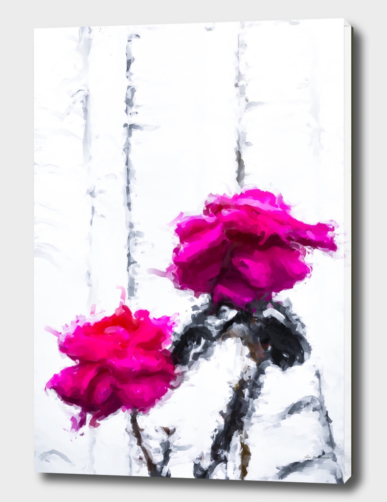 red roses with white wood background